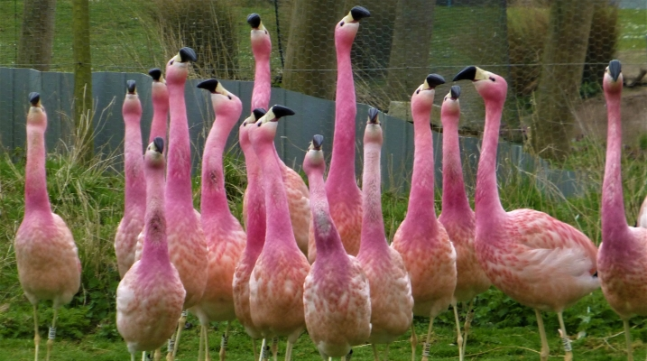 Fancy finding flirty flamingos in February?